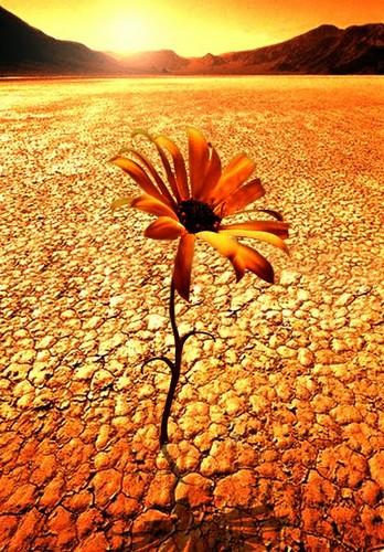 desert_flower.jpg