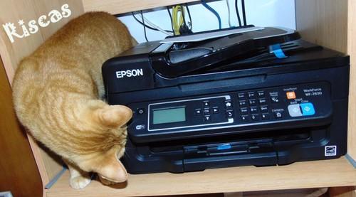 gatos-e-impressoras3.JPG