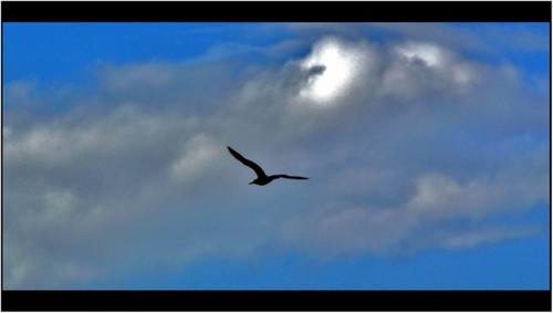 O vôo sublime- foto de Paulo Jorge A. C. Pereira.