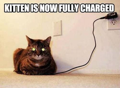 Cat-Humor.jpg