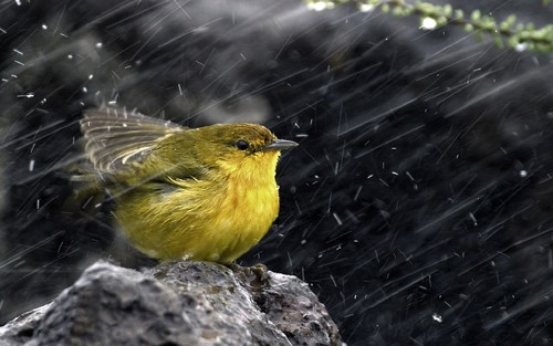 bird-in-rain-hd-wallpaper.jpg