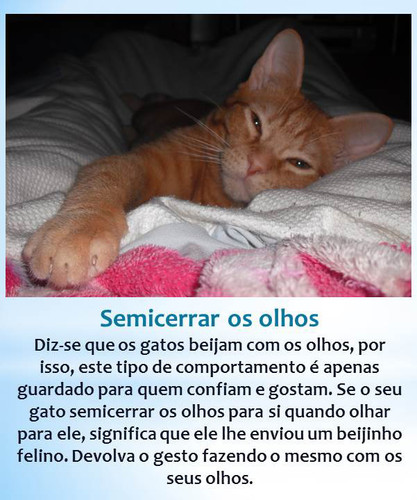 gato-beijoqueiro.jpg