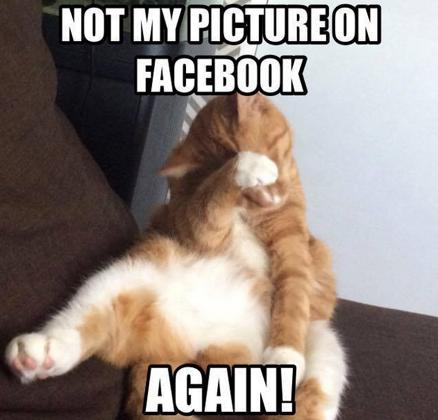 cat-memes-4.png