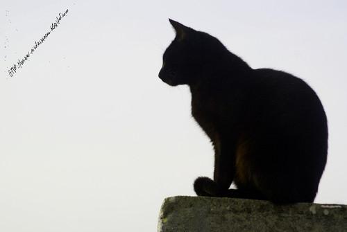 gato408122015blog.jpg