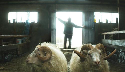 Hrutar-Rams.jpg