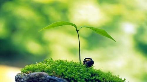 0 - Little-Growing-Tree.jpg