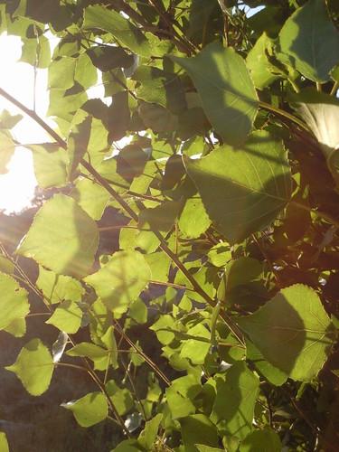 Foto original de DAPL - Luz - Junho 2015.jpg