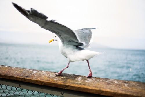Seagull-Unsplash.jpg