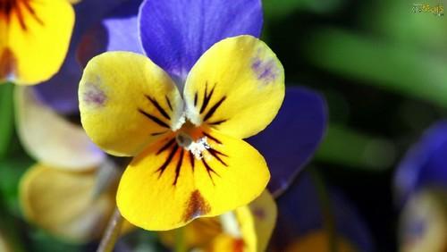 flor-bonita.jpg