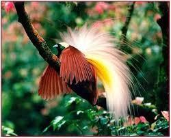 ave do paraiso laranja.jpg