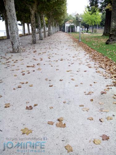 Parque verde do Mondego em Coimbra com as folhas de outono a cair [en] Mondego Green Park in Coimbra with autumn leaves to fall