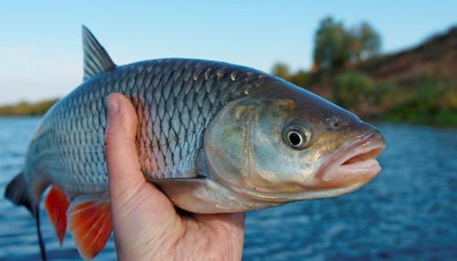 357551-fish.jpg