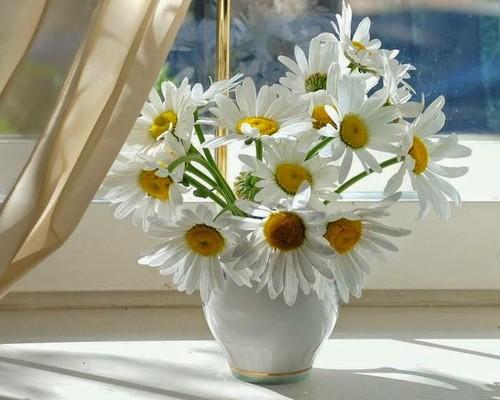 decor-flores-plantas-5.jpg