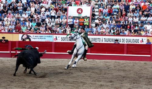 6Toiro Joao Pamplona.jpg
