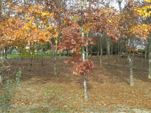 Cores de Outono.jpg