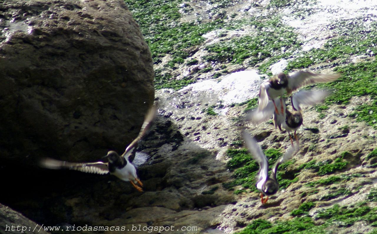 Aves2PM01122014blog.jpg