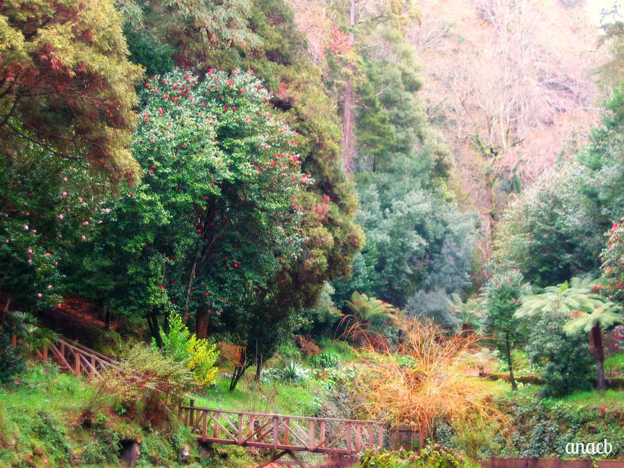 Buçaco-Vale dos Fetos (19) cópia assin.jpg