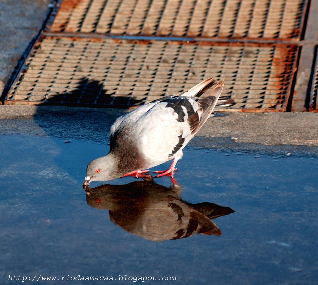 Pombos2Cascais24082015blog.jpg
