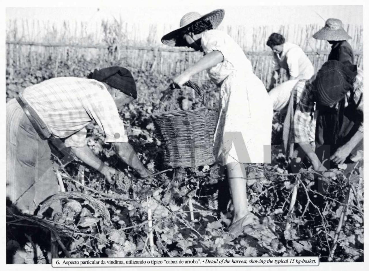Trabalhadores rurais em traje popular na vindima u