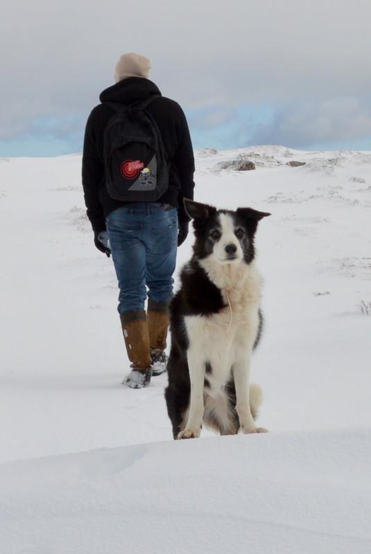 Dog waiting in the snow, Serra da Estrela, Portuga