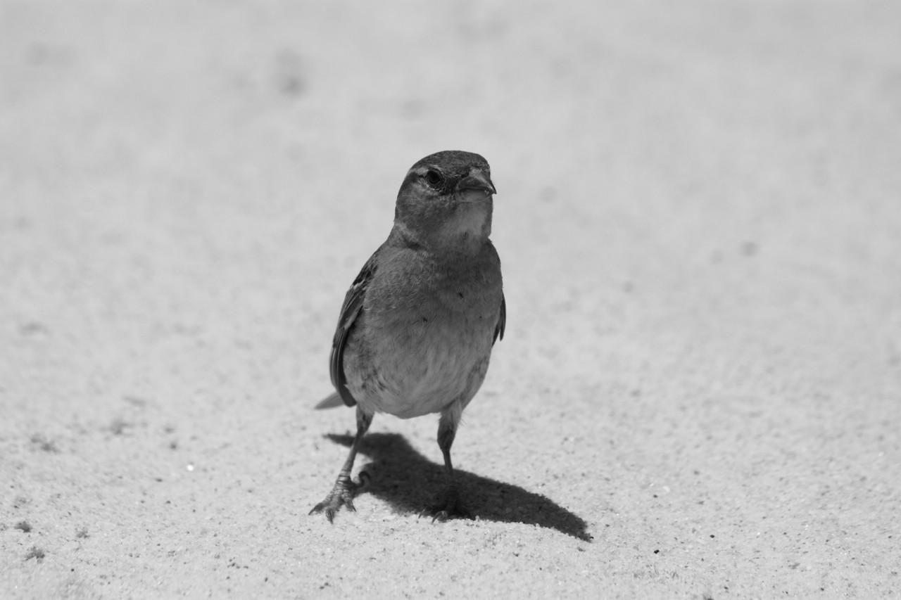 N.º 7298 — Praia do Barril © 2015