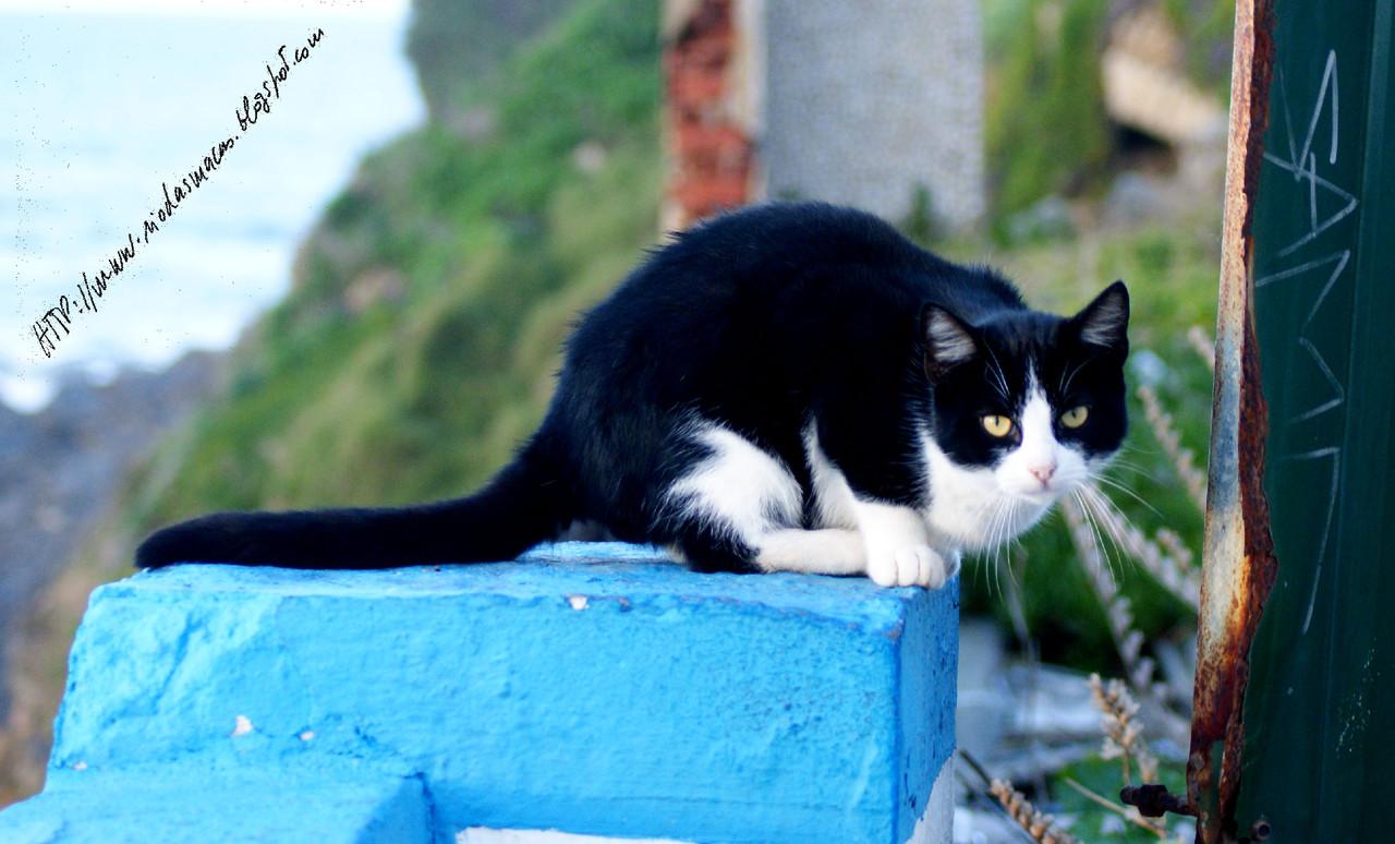 GatobPraiadasMaças05122014blog.jpg