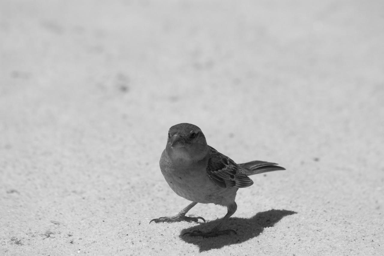 N.º 7297 — Praia do Barril © 2015
