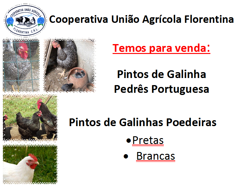 Pintos.png