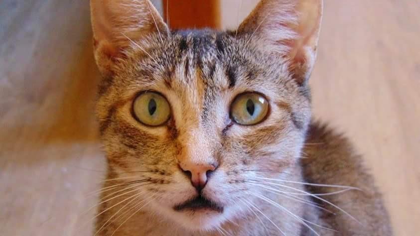 Juma nasceu em 2008.jpg