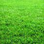 grass_lrg