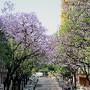 Lisboa 43.jpg