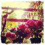 favretto.fleurs.jpg
