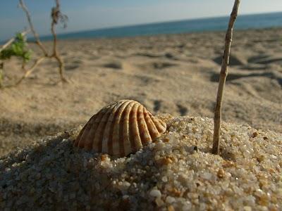 grao de areia.jpg