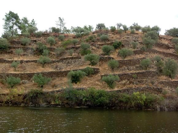 Rio Ponsul, m. esq. terraços.jpg