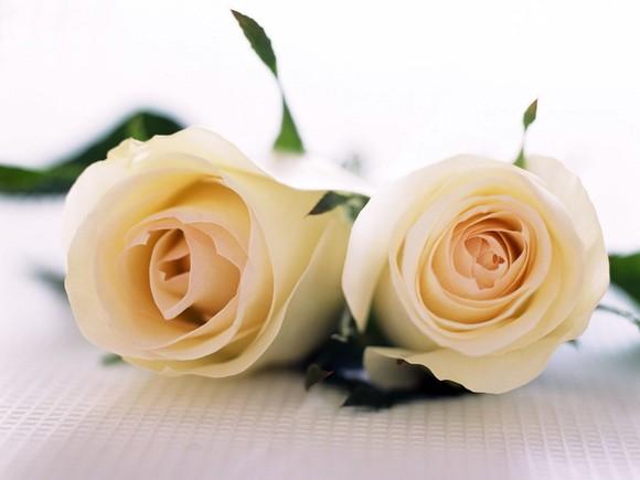 par-de-rosas_1201_1600x1200