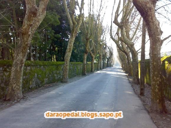 Serra_Canelas_Gaia_02