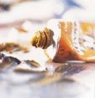 Tintas de Oleo Image 2-3.jpg