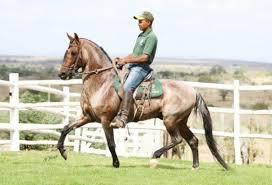 Cavalo Mangalarga.png