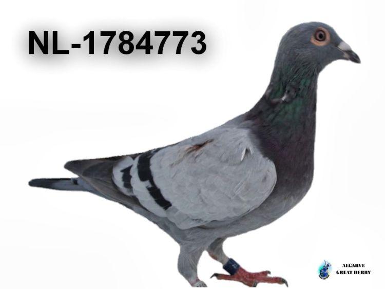 NL-1784773.jpg