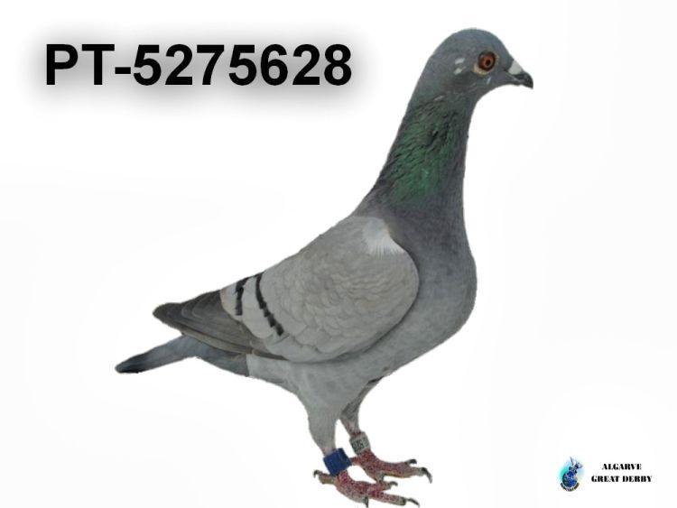PT-5275628.jpg