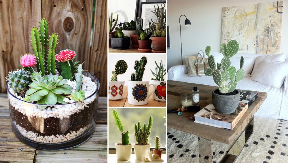 cactus cópia.jpg