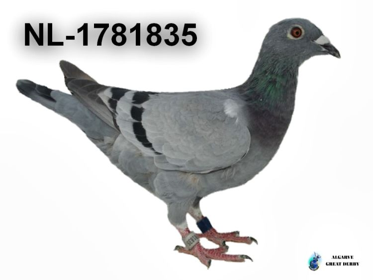 NL-1781835.jpg