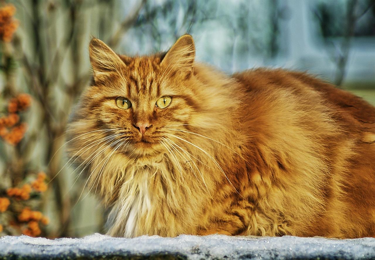 cat-67345_1280.jpg