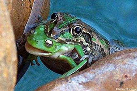 wpid-frognat_450x300.jpg